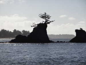 Tenacious Trees of Lincoln City, Orgeon